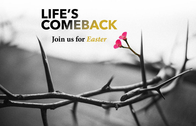 Church Postcards, Easter, Life's Comeback, 5.5 X 8.5